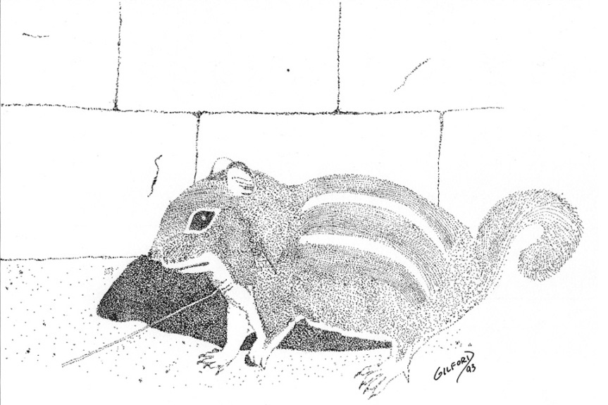 squirrel 1993 960